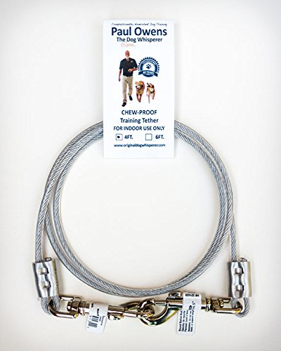 4 Ft. Chew-Proof Training Tether for Dogs & Puppies