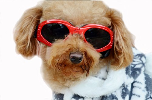 Enjoying Pet/Dog Puppy UV Goggles Sunglasses Waterproof Protection Sun Glasses For Dog – Red