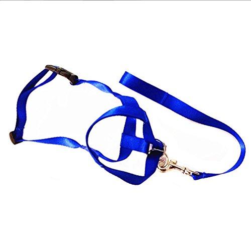 Pet Dog Nylon Adjustable Loop Bite Bark Control Easy Quick Fit Dog Muzzle (Blue, Small)
