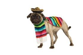 Rubies Costume Halloween Classics Collection Pet Costume, Medium, Mexican Serape
