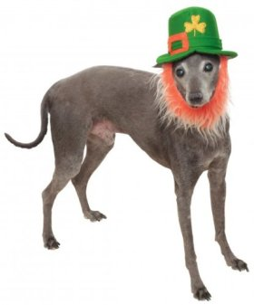 Rubies Costume Company St. Patty's Day Pet Hat with Beard, Small/Medium