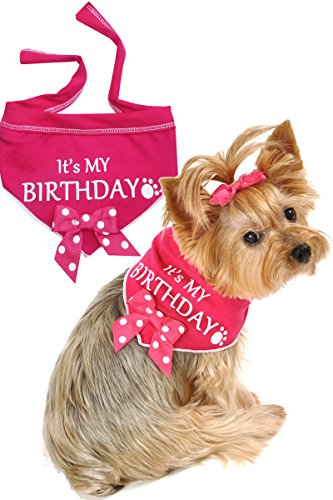 I See Spot It's My Birthday Pet Bandana Scarf in Hot Pink