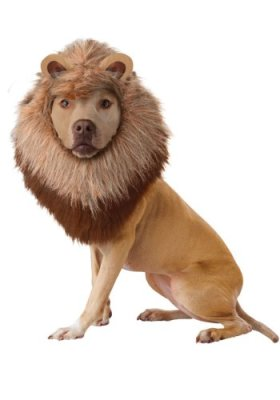 California Costume Collections Animal Planet Lion Dog Costume, Large
