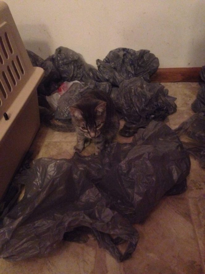 My cats keep playing with this pile of bags in my front closet
