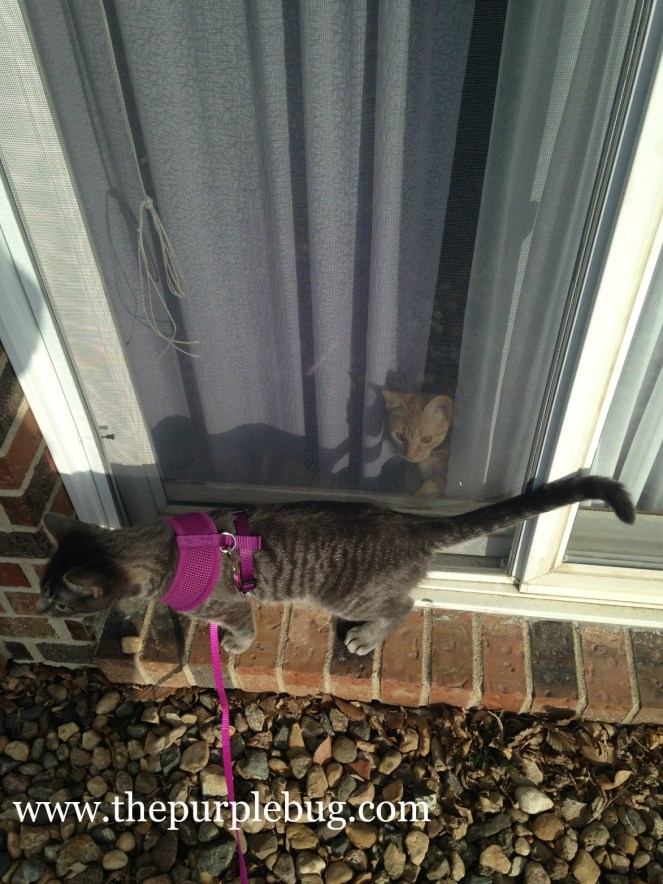 I bought my cats harnesses so I could take them for walks.