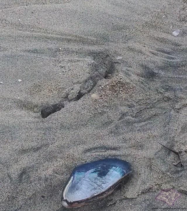 Jan 2014 shell