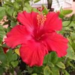 Lovely Flowers – July