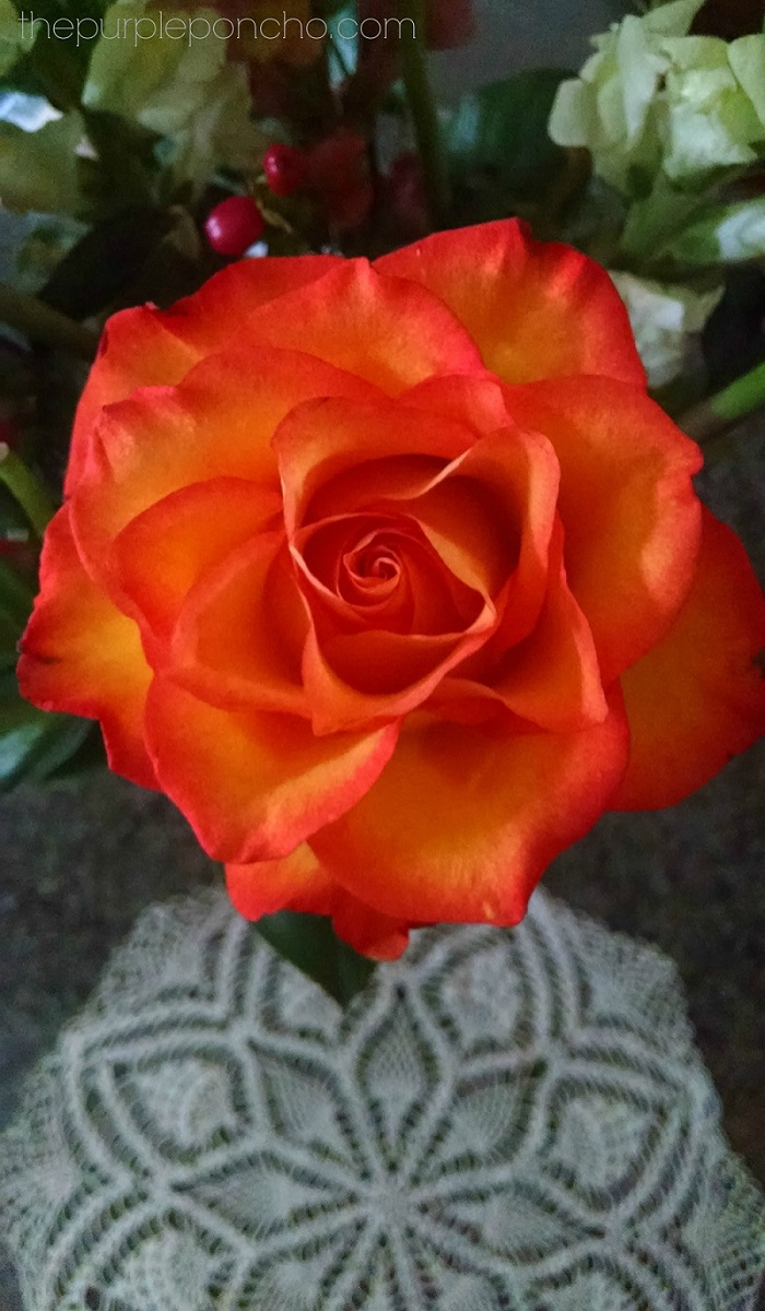 Orange Rose with Doily by The Purple Poncho