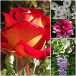 Flower Finds - June