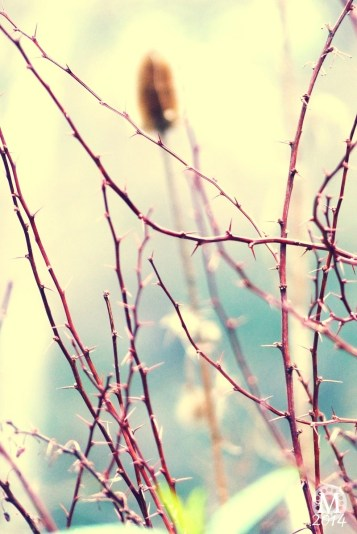 Project 365 : 2014 - Day 27