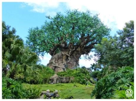 Tree of Life, Animal Kingdom