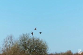 the-chase-nature-reserve-dagenham-essex54