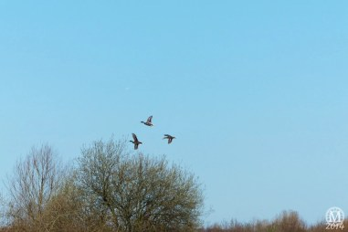 the-chase-nature-reserve-dagenham-essex54