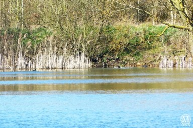 the-chase-nature-reserve-dagenham-essex55