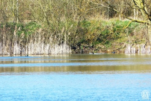 the-chase-nature-reserve-dagenham-essex55