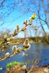 the-chase-nature-reserve-dagenham-essex61