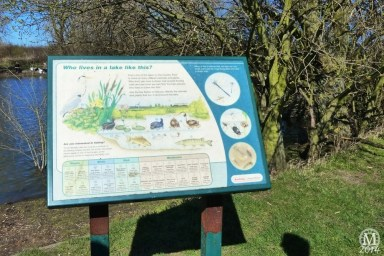 the-chase-nature-reserve-dagenham-essex62