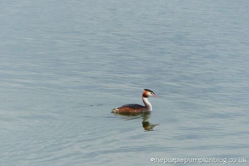 Hanningfield Reservoir Essex (32)