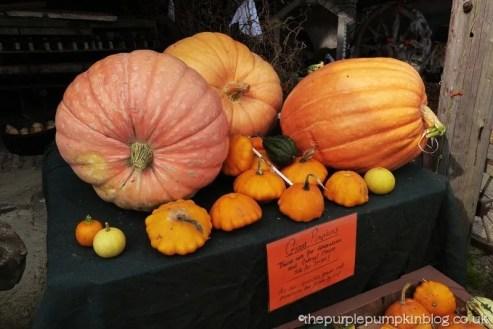 Norpar Barns Navestock Essex - Giant Pumpkins