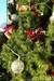 Dwarf Alberta White Spruce + Natural Christmas Decorations