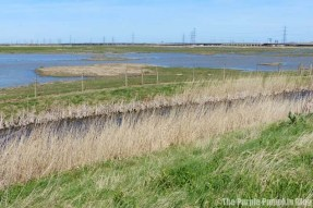 Rainham Marshes RSPB Nature Reserve