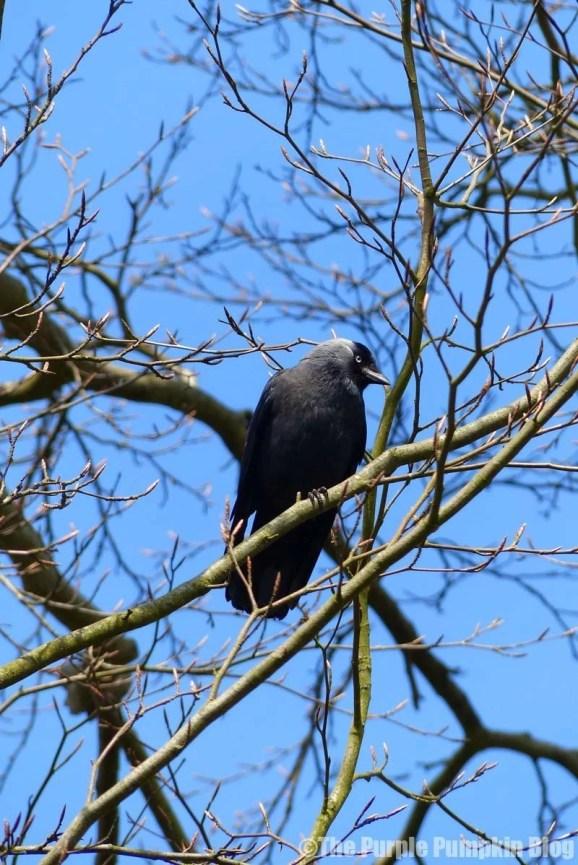 Birds at Bedfords Park