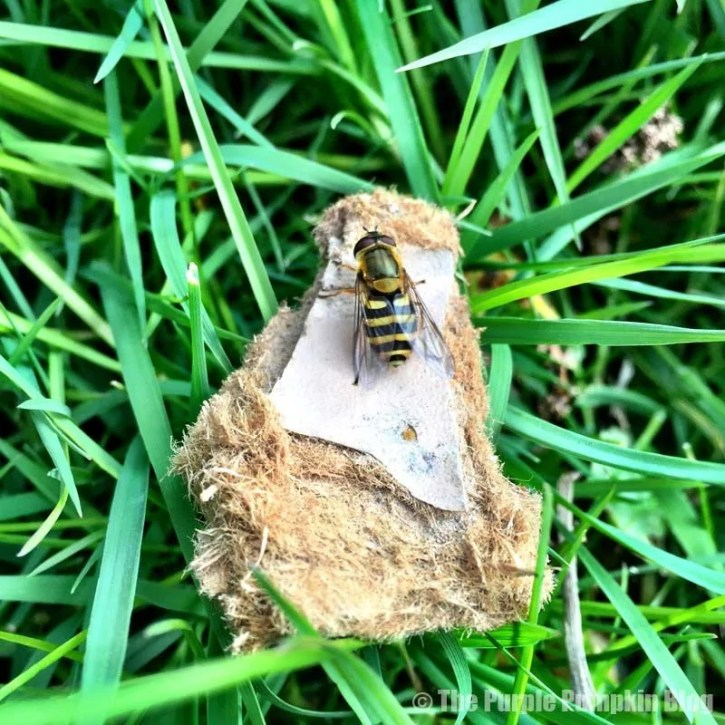 Insects at Bedfords Park