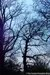 Trees at Bedfords Park