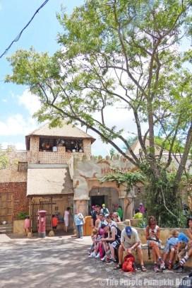 Harambe - Disney's Animal Kingdom