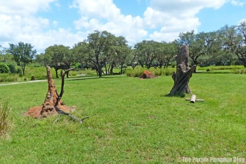 Kilimanjaro Safaris at Animal Kingdom
