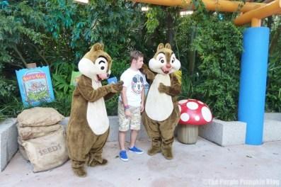 Meeting Chip n Dale at Animal Kingdom