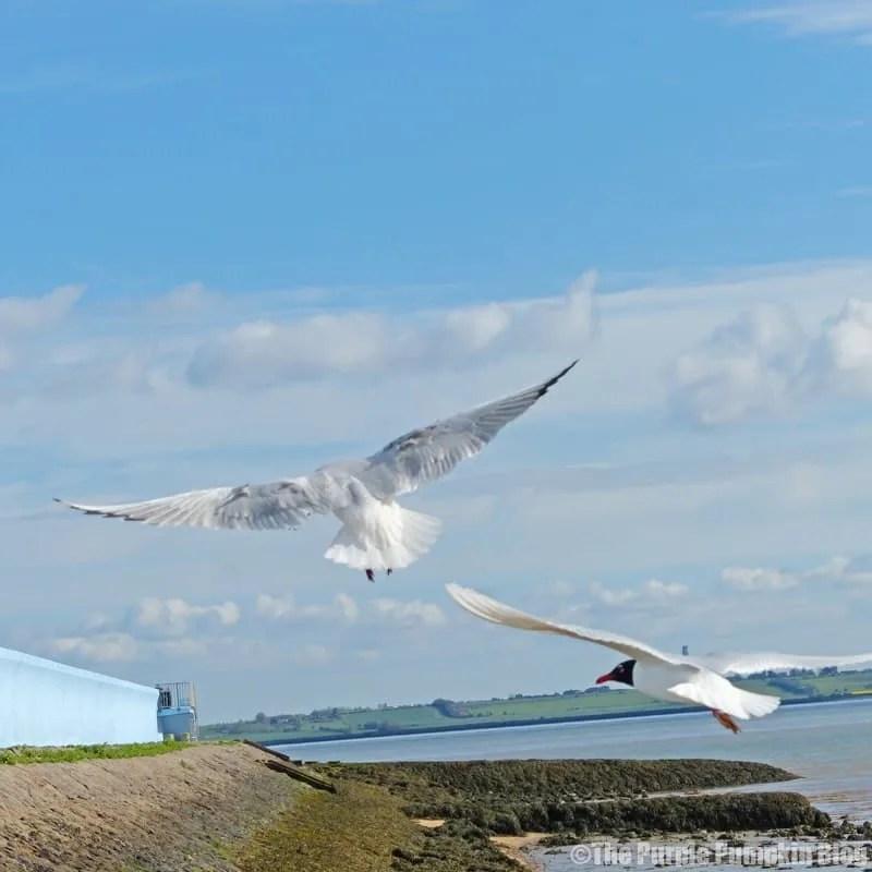 Thorney Bay - Canvey Island, Essex
