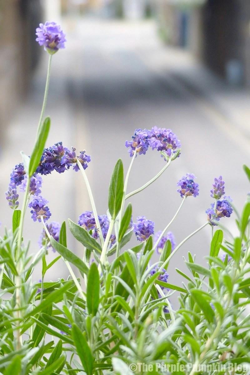 The Gentlemen Baristas - Flowers