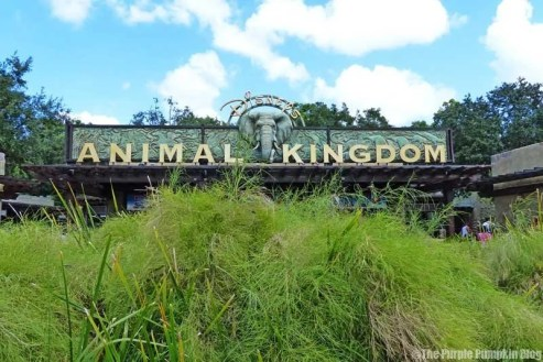 Disney A-Z - Animal Kingdom Sign