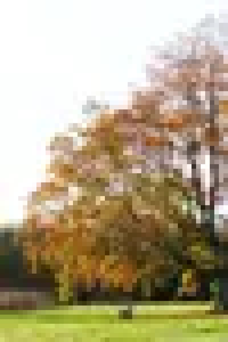 Reasons To Love Autumn - Changing Leaves