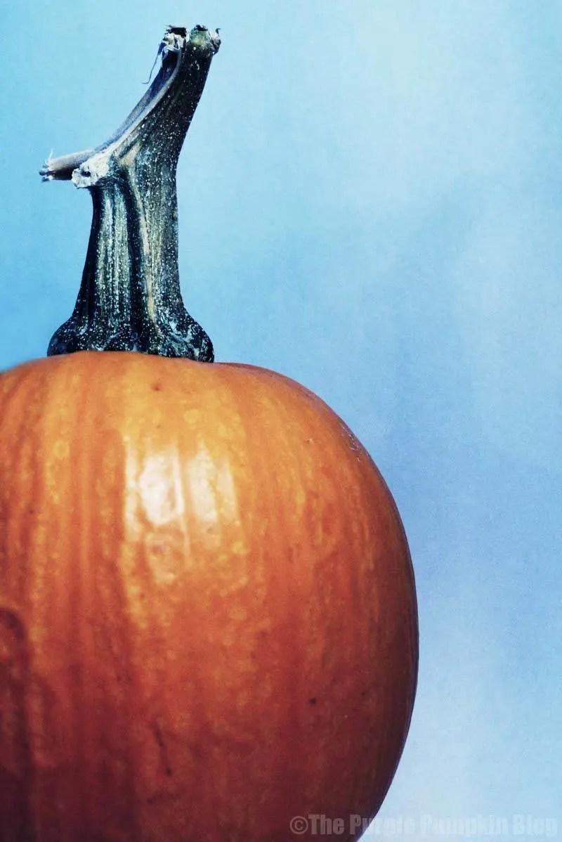Reasons To Love Autumn - Pumpkin