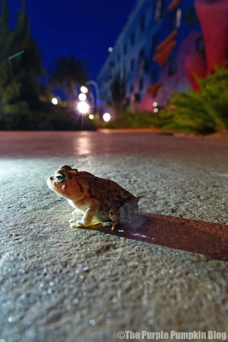 Frog at Art of Animation