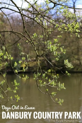 Danbury Country Park - Days Out in Essex