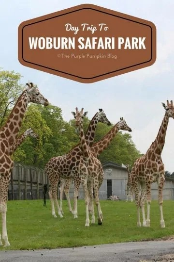 Day Trip to Woburn Safari Park, Bedfordshire, UK