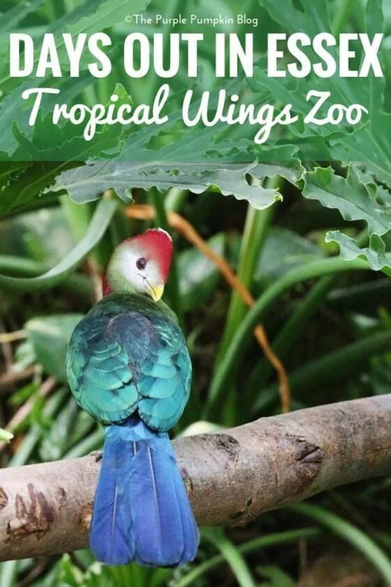 Days Out in Essex - Tropical Wings Zoo, South Woodham Ferrers