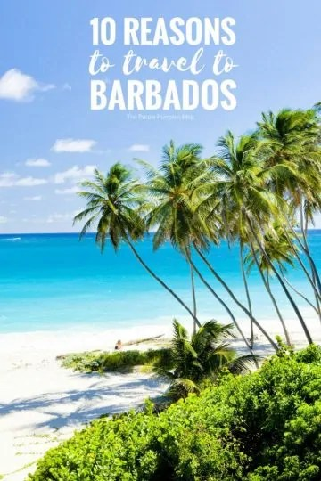 10 reasons to travel to Barbados. People flock to the tropical paradise to live the island life, relax, re-energise and refocus. So is it the perfect beaches, enticing food or enchanting festivals which has millions flocking to Barbados each year? #Barbados