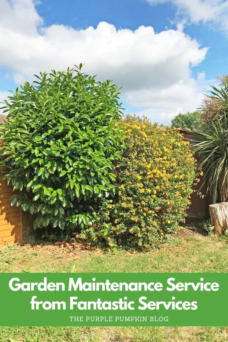 Garden Maintenance Service from Fantastic Services