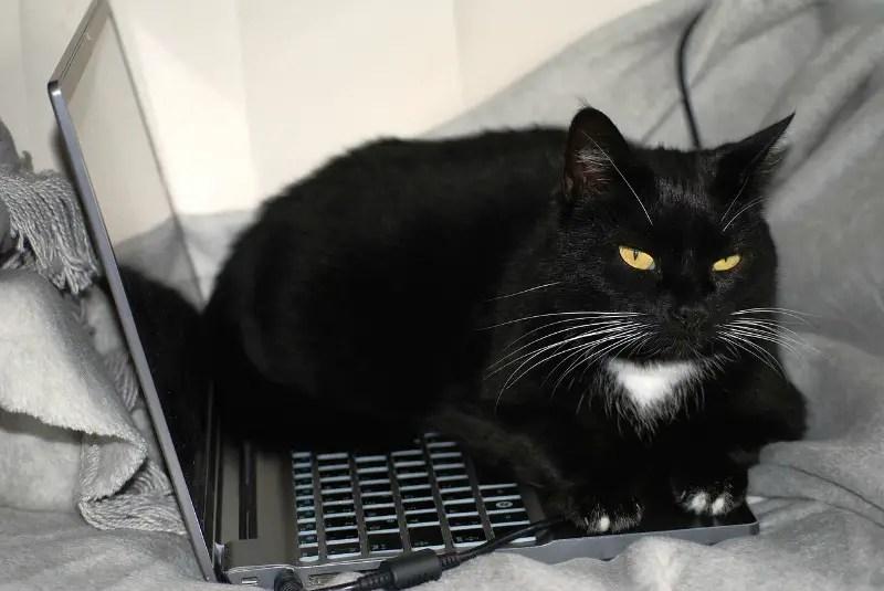 black cat on keyboard
