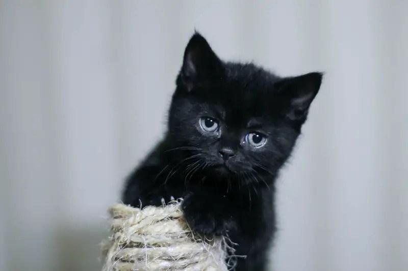 kitten 3422770 1280