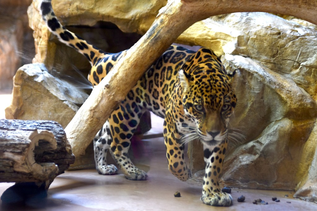 Omaha - Henry Doorly Zoo
