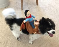 This Years Best Halloween Costumes For Dogs!  The Queen