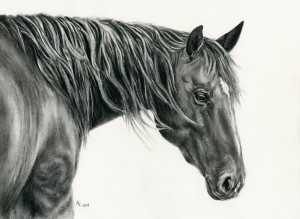 Janie B- I drew this to Auction off at the Reichert Celebration to raise money for the Diabetes Foundation. My Grandmother was affected with Juvenile Diabetes. She never let that get her down, she was brave and she was strong. Her name was Janie. I didn't realize until after I had gotten the drawing done that this horse's name was Janie too. The people that bought the drawing were so generous and they donated the painting back to me, so I could keep it and remember my grandmother! Prints are available and a portion of all the proceeds from this print will be donated to the Diabetes Foundation.