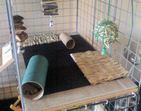 How to Build a Rabbit Cage Using Cubes  Advice for Indoor
