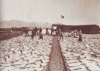 Salt cod drying in Iceland in 19th century.