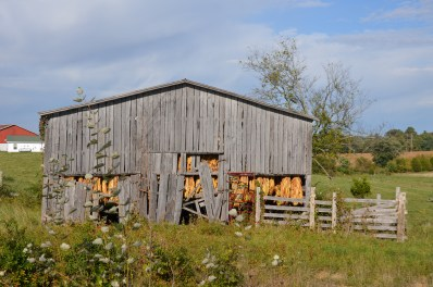 Kentucky tobacco drying barn, near Hardinsburg, Kentucky